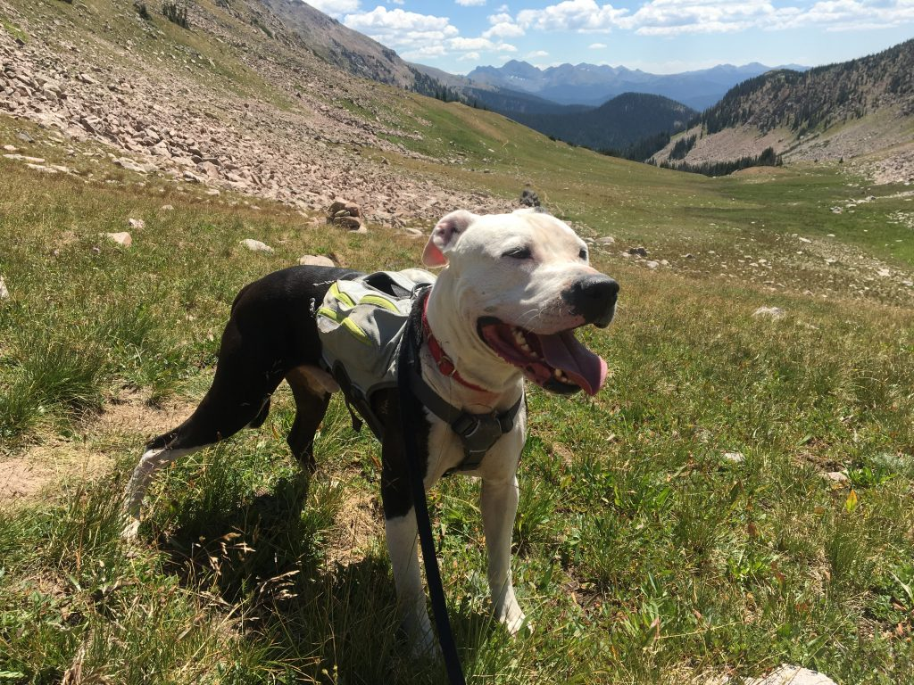 Marley hiking in the Medicine Bow.